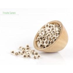 100g Teneriffa Samen entsprechen ca. 250 bis 300 Samen