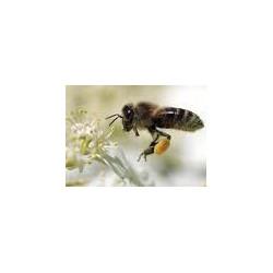 Bio-Bienenstockreiniger 0.5 Liter