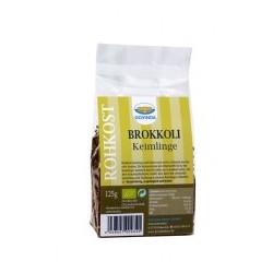 Brokkoli-Keimlinge