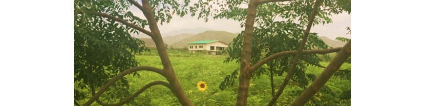 Bio Moringa Äthiopien