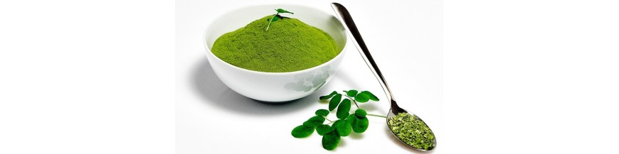Moringa Blattpulver & Tee